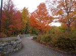 Just slightly beyond peak foliage in front of the Flume in NH's White Mountains